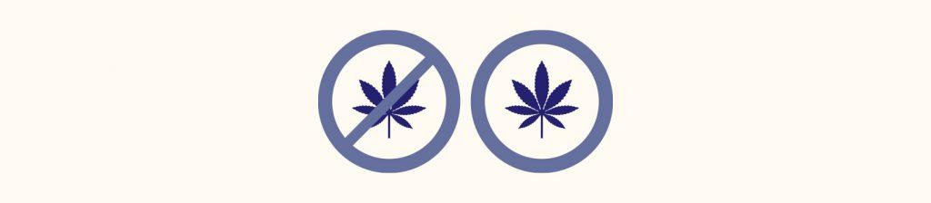 Blogbeitragsbild Cannabis Hanf